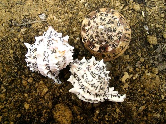 Hermit-Crab-Project