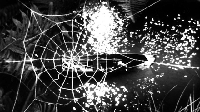 39. spider web.tif