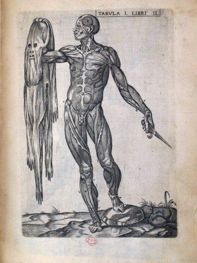 corps_humain_2