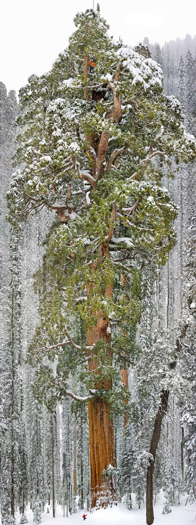 top-15-des-arbres-les-plus-magnifiques-dans-le-monde-269225
